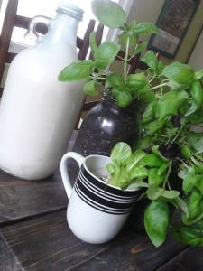 basil and milk